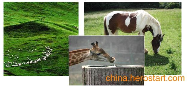 泰联新能源光伏发电之扬水牲畜饮水系统